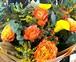 B0547) 季節のお花 / ミモザの花束 フラワーギフト