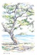 瀬戸内の海 ポストカード No.0083