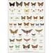 アート ポスター A4 サイズ KOUSTRUP & CO. - Day & Night Butterflies 昼と夜の蝶々