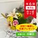 お花の定期便(年6回・隔月 日曜日お届けコース)のっぽサイズ