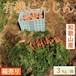 新鮮野菜 有機にんじん【60サイズ/箱】3Kg 和歌山県岩出産【産地直送】