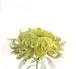 11月3日黄色い菊(フレーム付)