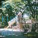 ハク亜キッズ / GO! KIDS GO! (CD-R)
