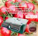 【数量限定】無電源野菜栽培キット SoBiC(ソビック)オーガニックプランター[2018年モデル]&専用野菜カプセル+野菜種子・生育保証付き ミニトマト「シュガリーテール」(S-039)