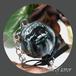 【BLACK】コラボロリポップ(スクリーム オブ テラー)