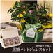 【敬老の日限定販売】とうがらし+黒糖パンドジェンヌプティ 9個入