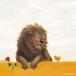 ポストカード ★*ライオンとひよこ
