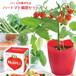 ハートの実がなる ハートマト栽培セット