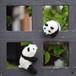 ころんころんパンダ