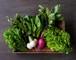 FIO野菜 Mセット(ファミリー向け標準セット)