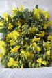 黄色い小さなエディブルフラワー(菜の花、ケールの花、サイシンなどから1種類)/1パック