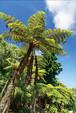 八木千賀子ポストカード「ヘゴの庭・ガーデン荘」(八丈島)