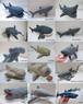 サメ一覧表(参考用)