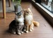 T様オーダー猫のコテツちゃんとハナちゃん