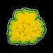 ヤドリギ(宿り木) 0350