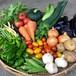 季節の野菜セット Mサイズ(9月)★送料込★