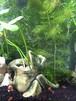 カエル水草鉢 1(おもり隊 機能付き 後)