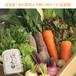 宮城県産 旬の野菜と平飼い卵セット(定期便) *一部地域送料無料