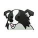 ボーダーコリー(大)     犬ステッカー