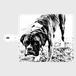 手帳型スマホケース android =rockdog