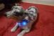 小型犬用 光るLED首輪 Sサイズ