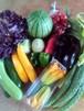 【7/29木曜日発送】はるきち旬の有機野菜セット詰め合わせ