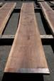 ブラックウォールナット4.5m