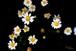 Flower-21