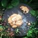 オーガニックチョコチップ&カシューナッツクッキー