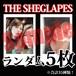 【チェキ・ランダム5枚】THE SHEGLAPES
