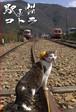 絵はがき【線路を見守る駅長猫】