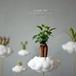 地上に降りてきた雲(植物)