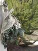 ユーカリとコットンフラワーのミニスワッグ/プリザーブドグリーン・ドライフラワー/ナチュラルインテリア/母の日ギフト
