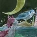 神山水樹『ノラネコとナイトヘロン』CD