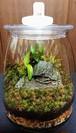苔ボトル Kokebottle Moss bottle ライト付きセット 016