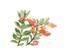 10月22日ヒポシルタ(フレーム付)