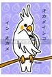 オカメインコ(ポストカード)