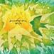 【PFCD66】Super Magic Hats『Wish』CD