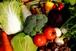 「大和高原旬の野菜」おためしセット