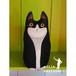 べロアの子猫ーFilou フィル