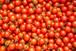 トマト3種詰め合わせ3kg「ミニトマト」「ロッソナポリタン」「サンマルツァーノ・リゼルバ」
