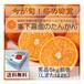 食べるジュース 完熟たんかん(秀品 5Kg前後)