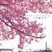 【CD SINGLE】この街の春