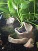 カエル水草鉢 2(おもり隊 機能付き 前)