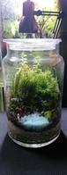 苔ボトル Kokebottle Moss bottle ライト付きセット 005