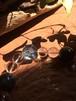 ☆宇宙の子マサ応援企画☆ 海の子ブレスB メンズ 内周16cm