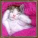 【印刷物】ステッカー(シール):april_forestcat
