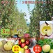 青森県津軽産りんご【3種類詰合せセット】3Kg/箱【送料無料】