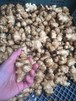 菊芋 250g