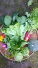 宇宙イチ笑顔になれるかもしれない、旬のおまかせ野菜セット(L)